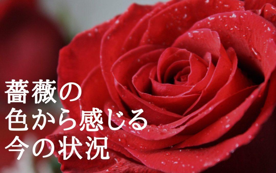 薔薇の色から感じる今の状況