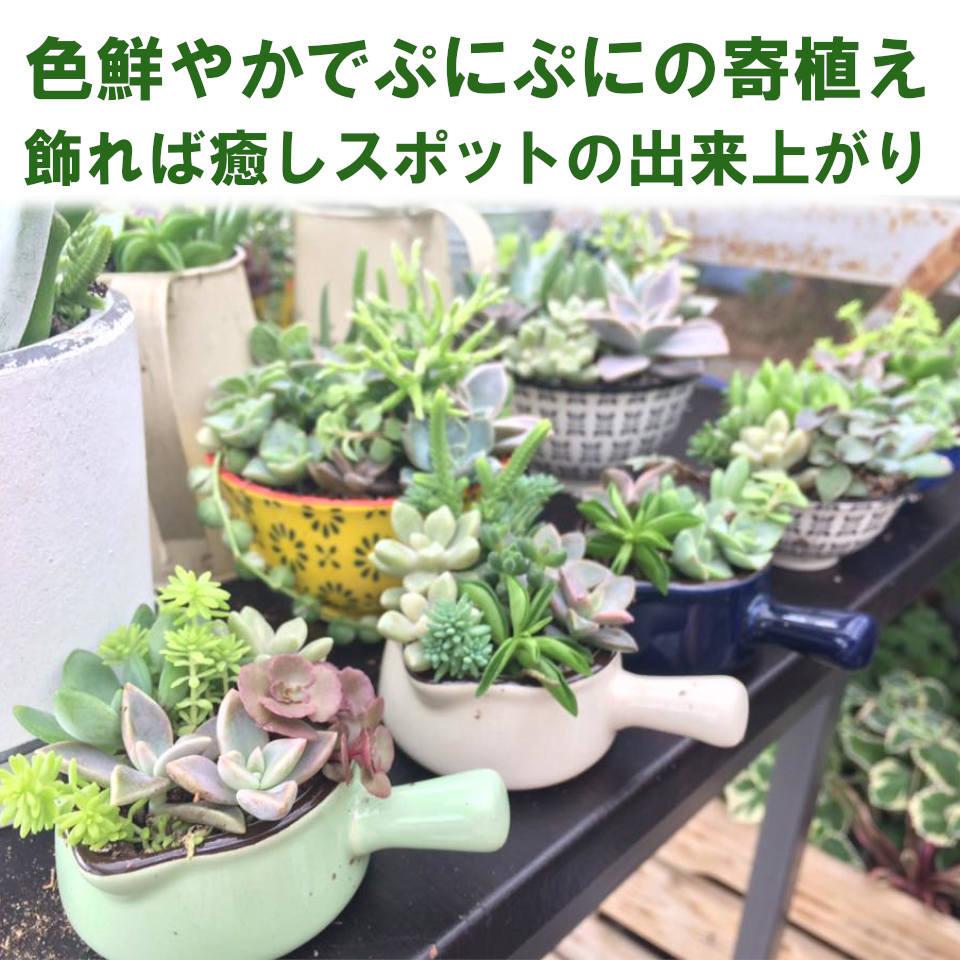 【ブース№14】多肉植物の苗と寄植え
